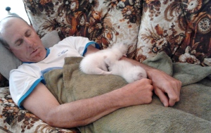 Fred Perron and kittens sleeping