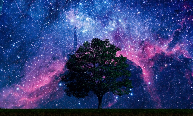 Tree in a field of stars