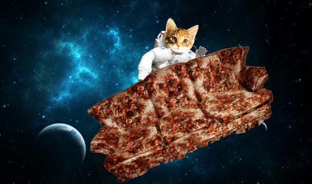 couhc in space with astronaut cat