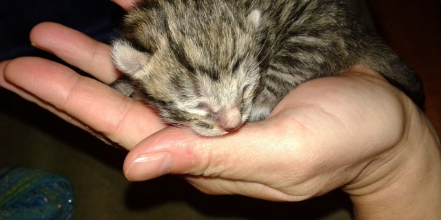One day old kitten
