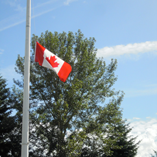 Flag at half mast for Kelly Collins