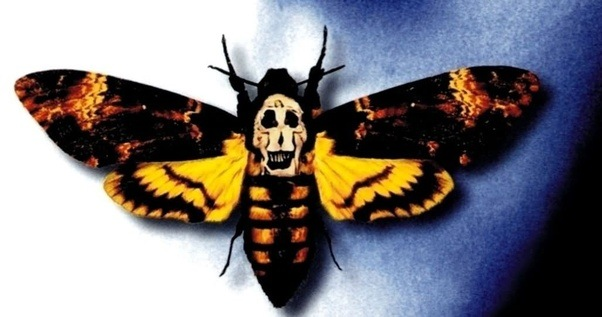 Death's Head Moth from Silence of the Lambs